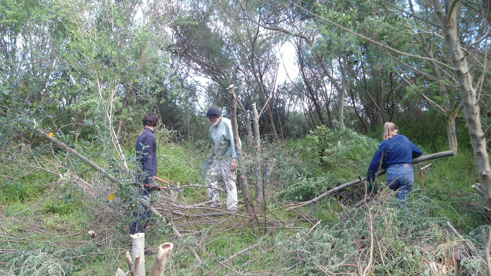 15. Peter Watson & youth sorting, pruning & clearing branches, 2nd June 2018